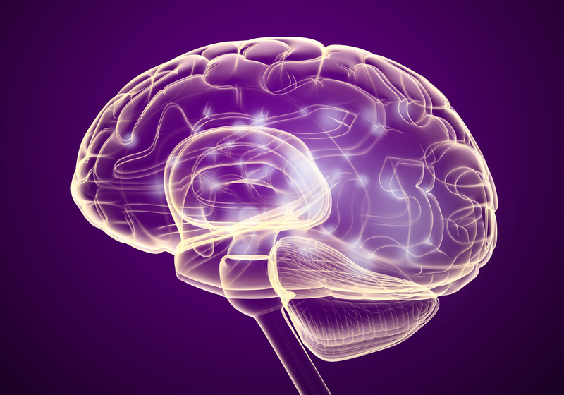 Self-Control Center in the Brain Linked to Weight Loss | The ...