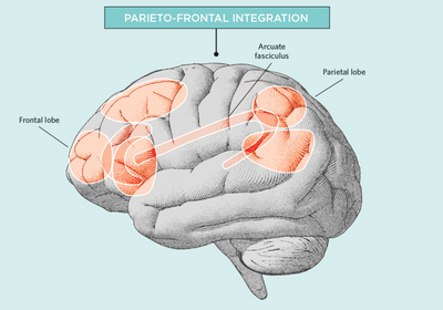 Infographic: What Makes a Brain Smart?