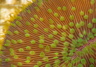 Image of the Day: Cryo Corals