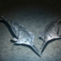 First Vertebrates Evolved in Shallow Water