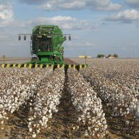 USDA Approves Edible Cotton