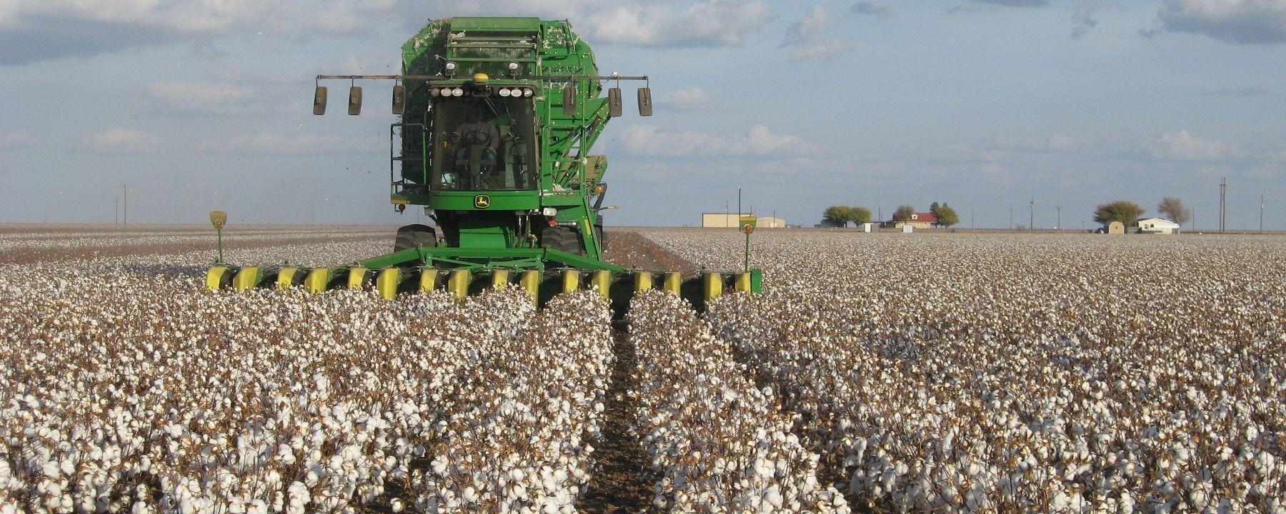 USDA Approves Edible Cotton