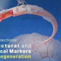 Missed Connections: The Structural and Biochemical Markers of Neurodegeneration