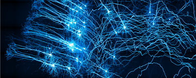 Revealed: New Cortical Neuron Types