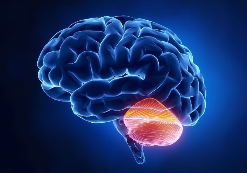 """Cerebellum Does """"Quality Control"""" for Our Thoughts: Study ..."""