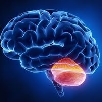 "Cerebellum Does ""Quality Control"" for Our Thoughts: Study"