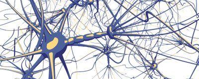 Cannabinoid Exposure During Adolescence Disrupts Neural Regulation