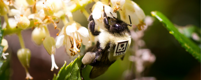Pesticide Exposure Alters Bumblebees' Behavior in Their Nests