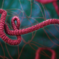 Ebola Clinical Trial to Begin Amid Outbreak in DRC