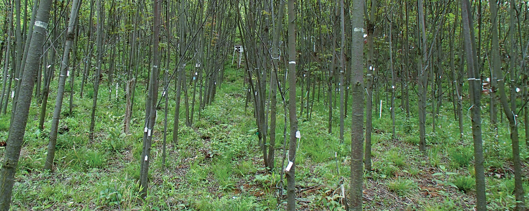 Diverse Forests Are Better at Accumulating Carbon