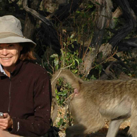 Dorothy Cheney, Pioneer in Social Cognition, Dies