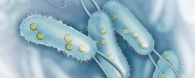 "Bacteria Harbor Geometric ""Organelles"""