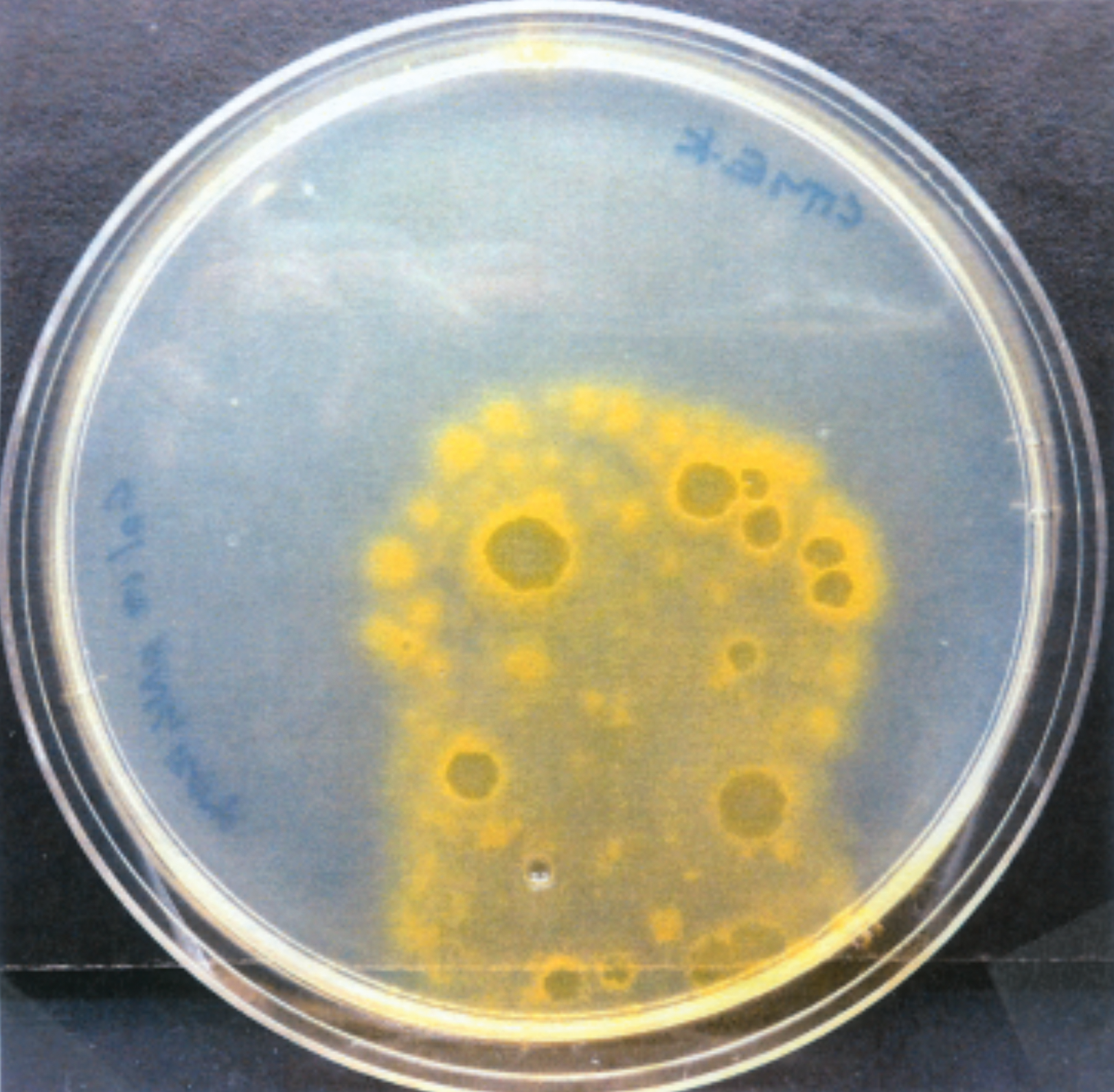 Bacteria Harbor Geometric