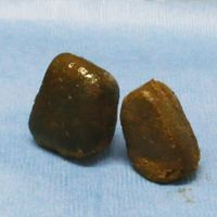 Image of the Day: Wombat Poop