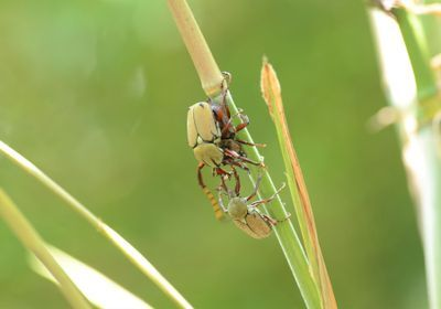 Image of the Day: Beetle Fight
