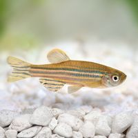 Effects of Antidepressants Span Three Generations in Fish
