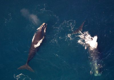 Suit Filed to Stop Seismic Airgun Blasting in Atlantic Ocean