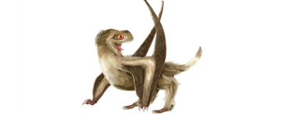 Pterosaurs Sported Feathers, Claim Scientists