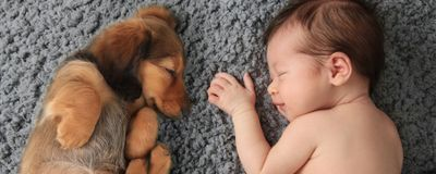 Number of Pets in Infancy Tied to Lower Allergy Risk