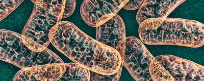 Mitochondria Play an Unexpected Role in Killing Bacteria