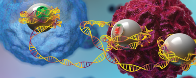 Researchers Engineer Epigenome Editors to Study How Gene Expression Affects Disease