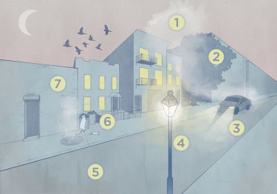 Infographic: How Cities Influence Evolution