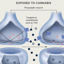 Infographic: How Exposure to Cannabis in Utero Affects Development