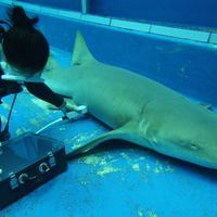 Image of the Day: It's a Shark!