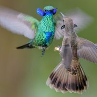 Image of the Day: Fight Club