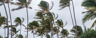 How Trees Fare in Big Hurricanes