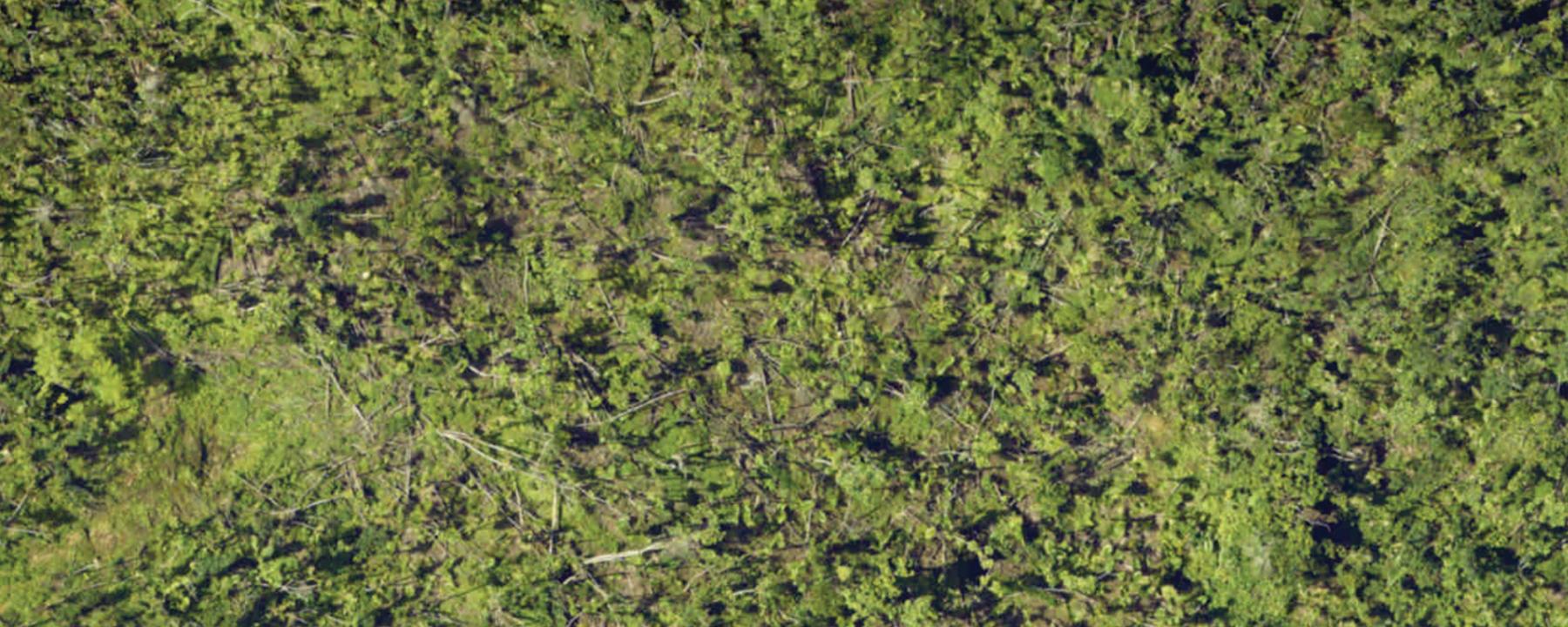 How Trees Fare in Big Hurricanes | The Scientist Magazine®