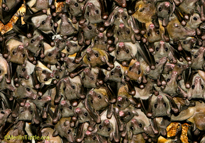 Opinion: Disease Prediction by Bat Virus Surveys Is a Waste