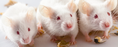 An Algorithm to Predict the Age of Your Lab Mice