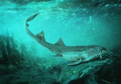 Newly Discovered Ancient Shark Found Alongside Bones of <em>T. rex</em>