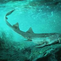 Newly Discovered Ancient Shark Found Alongside Bones of <em>T. rex</em>