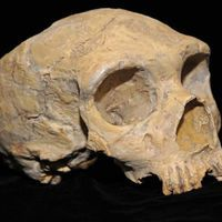 Neanderthal Ancestry in Europeans Unchanged for Last 45,000 Years