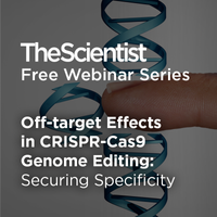 Off-target Effects in CRISPR-Cas9 Genome Editing: Securing Specificity