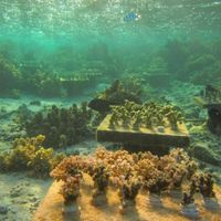 Image of the Day: Coral Tables