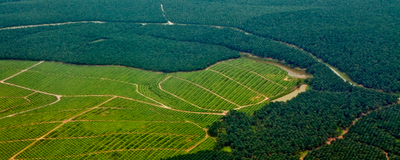 Deforestation Tied to Changes in Disease Dynamics