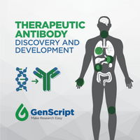 Therapeutic Antibody Discovery and Development