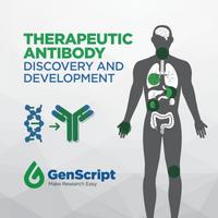 治疗性抗体发现和发展