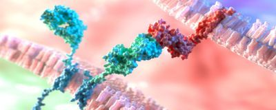 <em>Nature </em>Retracts Paper on Delivery System for CAR T Immunotherapy