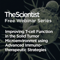 Improving T-cell Function in the Solid Tumor Microenvironment using Advanced Immunotherapeutic Strategies