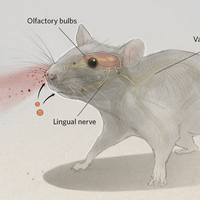 Infographic: Viruses on the Brain