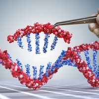 China Proposes New Gene-Editing Regulations