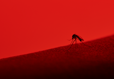 Does Prior Dengue Exposure Help or Hurt a Zika Infection?