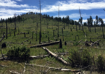 Climate Change Impairs Trees' Recovery from Wildfires