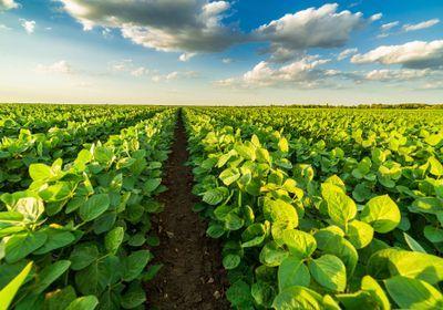 Gene-Edited Soybean Oil Makes Restaurant Debut