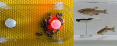 "Fish and Bees ""Talk"" with Help from Robot Translators"
