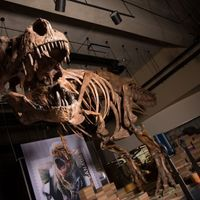 Image of the Day: Scotty the&nbsp;<em>T. rex</em>